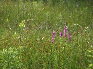 Wildflowers at Lake Louise, Boyne Falls, MI