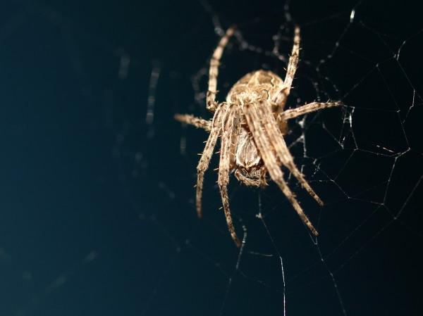 Spiders Under the Bridge 1