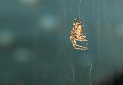 Spiders Under the Bridge 2