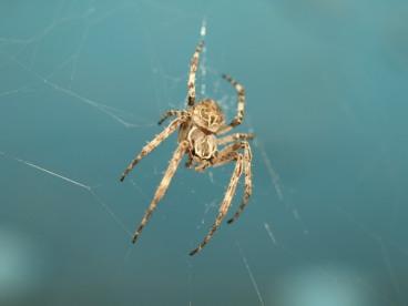 Spiders Under the Bridge 3
