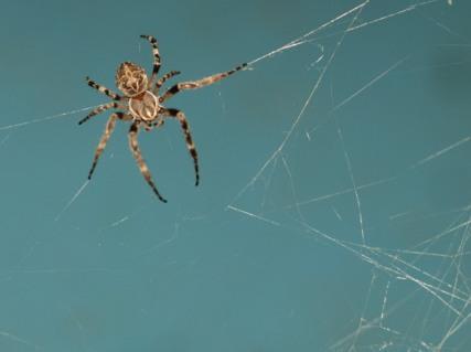 Spiders Under the Bridge 4