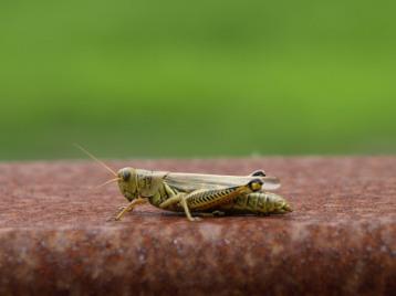 Differential Grasshopper