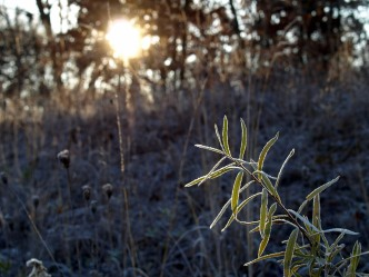 Frost on a Grand Rapids Morning