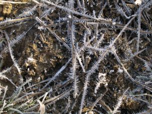 Frosted ground