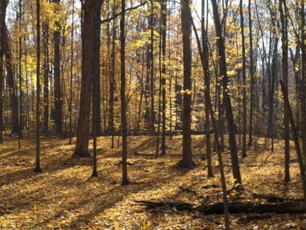 Scotts Woods, Lansing