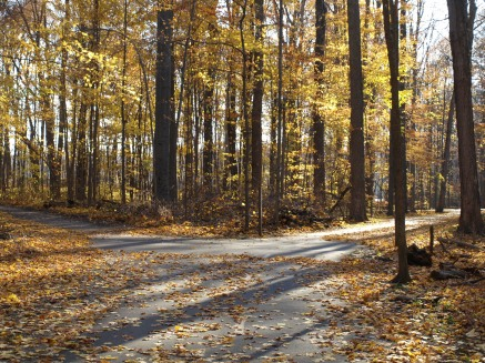 Two Roads Diverged in a Yellow Wood