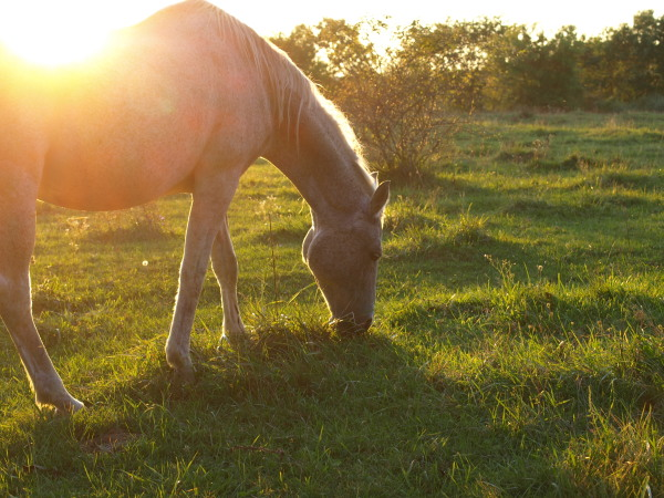 Horse in Mid-Michigan Sunset