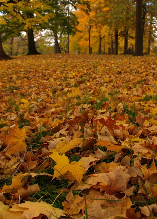 Autumn Comes to Potter Park