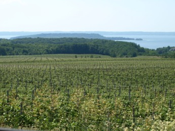 Old Mission Peninsula Vineyard