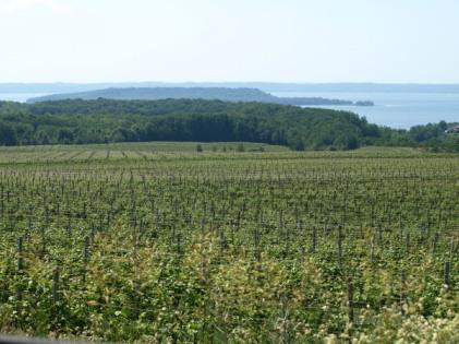 Old Mission Peninsula Vineyard