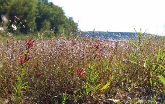 Wildflowers in September