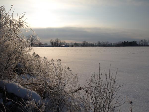 Winter Field on the way to Williamston