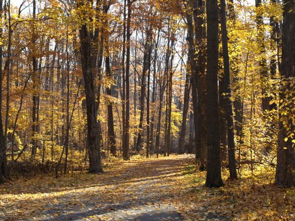 The Trail to Hawk Island