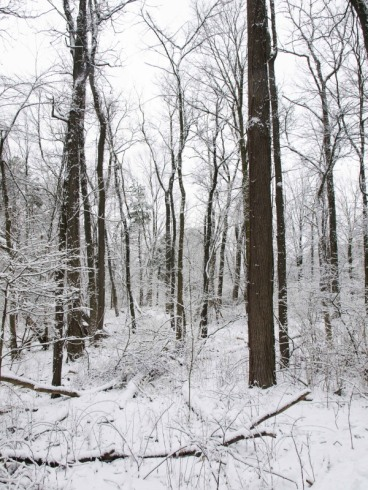 Snowy March day at Fenner Nature Center, Lansing, MI