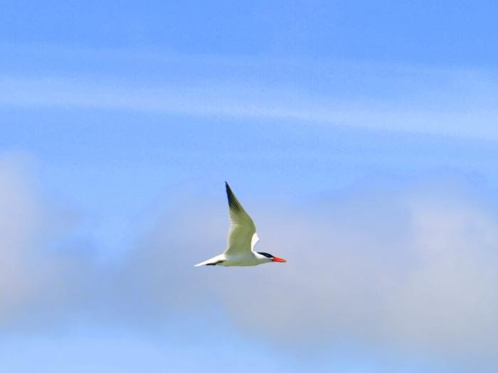 tern3
