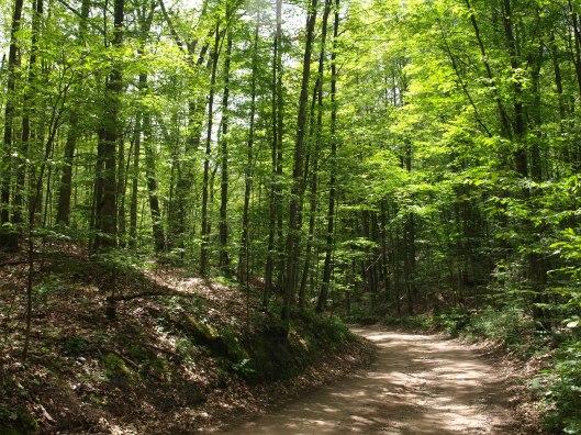 Woods06