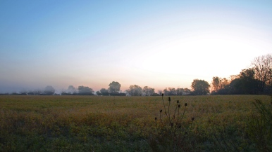 August field, Grand Ledge, MI