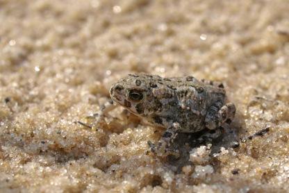 Tiny toad at Lake Louise
