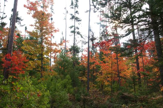 Fall color at Tahquamenon