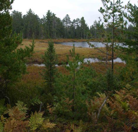 Wetland in Tahquamenon Falls State Park