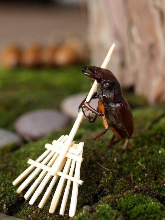 Nature diorama cuteness