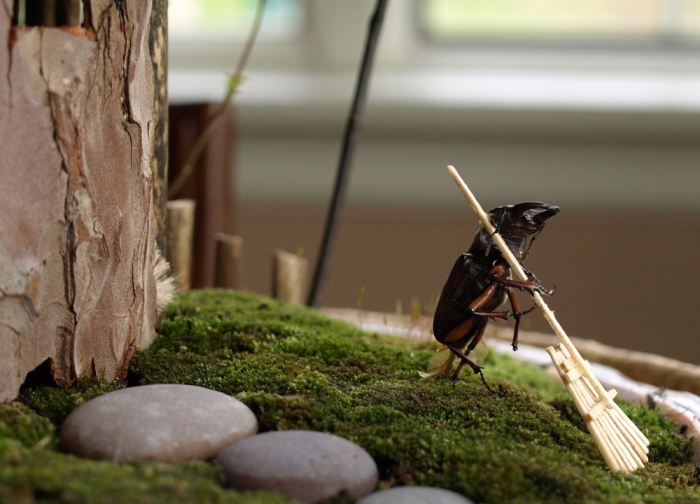 Nature diorama cuteness