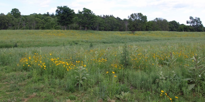Native wildflowers and grasses at Fenner Nature Center