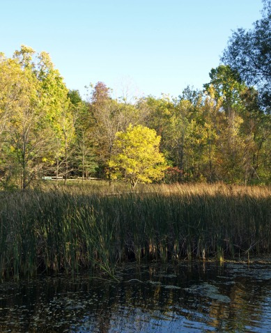 Fall at Fenner Nature Center