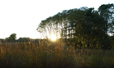 Sunset at Fenner Nature Center, October 2015