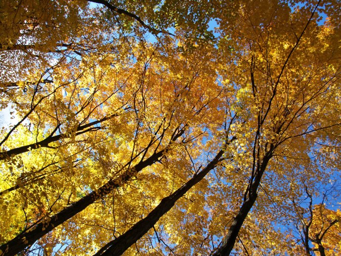 Beneath the Autumn Canopy at Fenner Nature Center