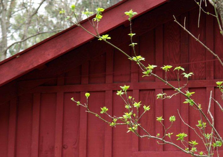Spring at Fenner Nature Center