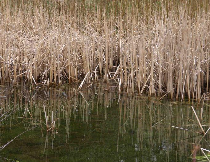 Pond at Fenner Nature Center