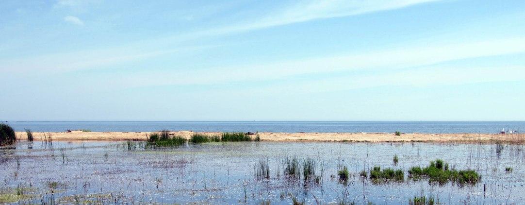 Saginaw Bay Marshlands