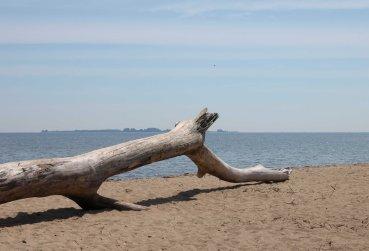 Saginaw Bay