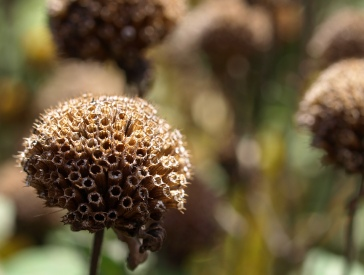 Gone to seed, Fenner Nature Center