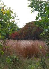 Sumac and tallgrass prairie, Fenner Nature Center