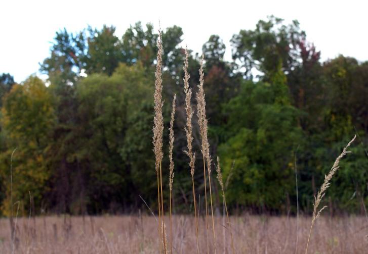 Tallgrass Prairie, Fenner Nature Center