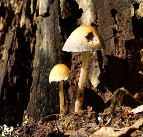 Mushrooms, Fenner Nature Center