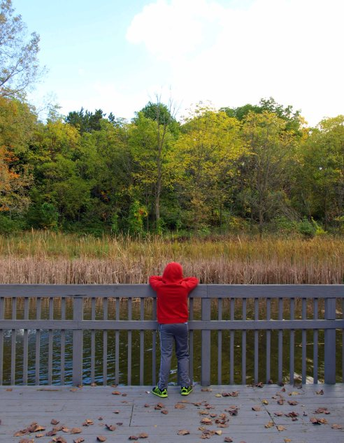 The Boy contemplates nature