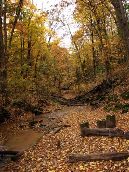 Eddington Creek, North Country Trail, Manistee National Forest, Michigan, October 2016