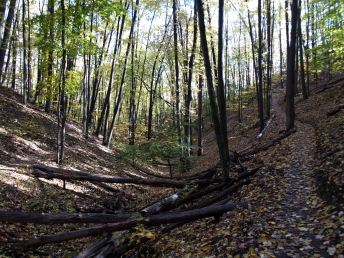 North Country Trail, Manistee River, October 2016