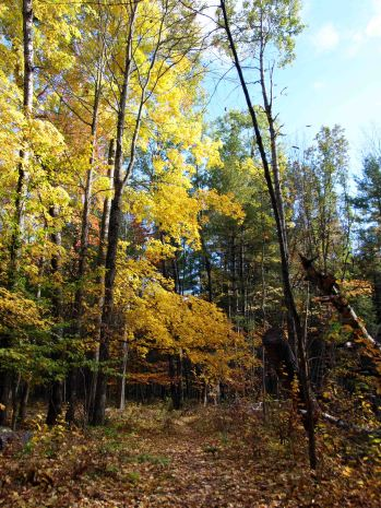 Manistee River Trail, October 2016