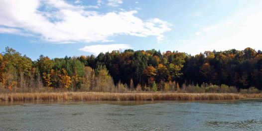 Manistee River near Red Bridge, October 2016