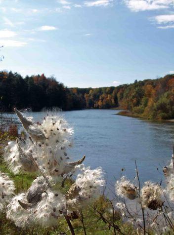 Manistee River near Red Bridge, October 2016