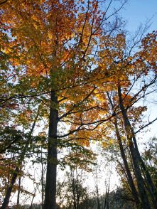Manistee National Forest, October 2016