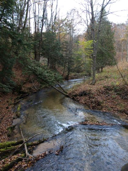Slagle Creek, Manistee River Trail, Lower Peninsula, October 2016