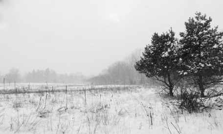 Snowy Day at Fenner Nature Center, December 2016