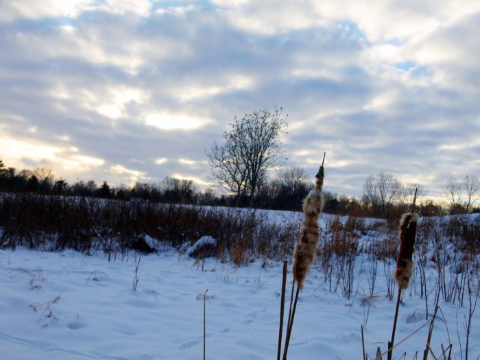Winter at Fenner Nature Center